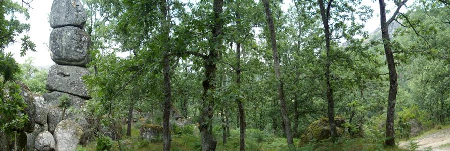 Wald_Steinturm_Port_IMGP7321_klein